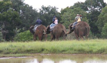 Africa elefantes