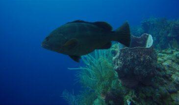 Mergulho em Belize