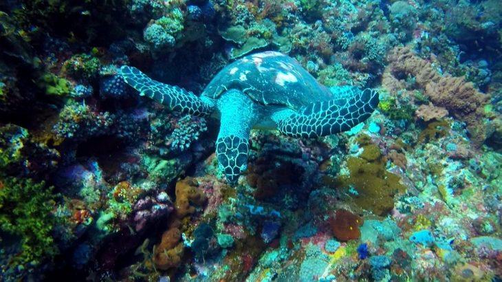 Mergulho em Komodo